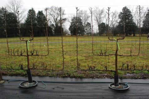 Шпалеры для вьющихся растений из металла фото